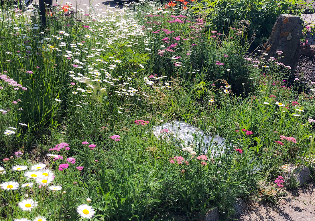Flowers blooming at Stonehouse RV Park in Stanley, North Dakota
